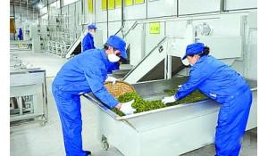 茶叶生产与加工