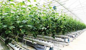 现代农业技术专业