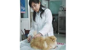 畜牧兽医专业培养方向