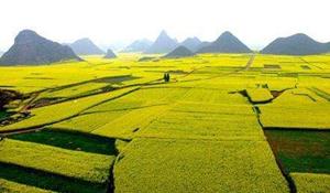 农业经济管理专业