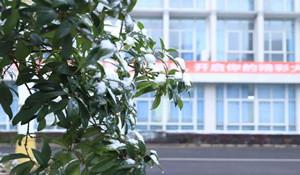 德阳科贸职业学院五年制大专