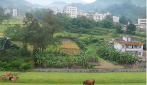 农村行政与经济管理