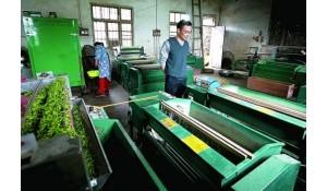 茶叶生产加工技术专业