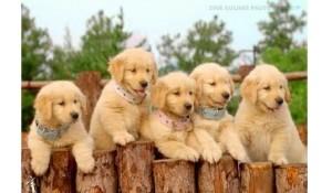 宠物养护与经营