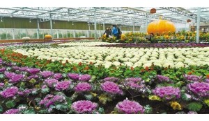 果蔬花卉生产技术